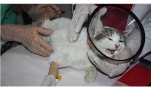 Diyarbakır'da patileri kesilen kedi kurtarılamadı!