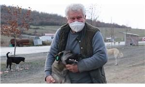 Sokak hayvanlarına daha iyi bakabilmek için 71 yaşında veterinerlik bölümünü bitirdi