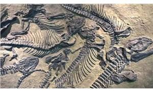 Çin'de kuluçkaya yatmış dinozor fosili bulundu
