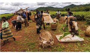 Afrika'da rant tarlaları