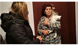 Ankara'da Van kedisi baskını