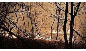 Doğu Karadeniz'de 23 farklı noktada yangın çıktı