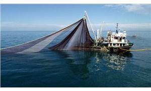 İlk kez yaşanıyor: Karadeniz'de balıklar tersine göçe başladı!