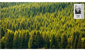 Ormanlarımız kanunlarla yok edilirken kimse seyirci kalmamalı
