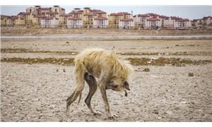 Prof. Dr. Doğanay Tolunay: İklim krizi beka sorunu