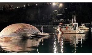 İtalya'da 70 tonluk balina kıyıya vurdu