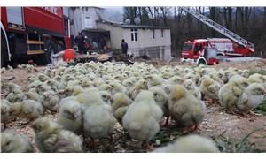 Tavuk çiftliğinde yangın: Binlerce civciv öldü