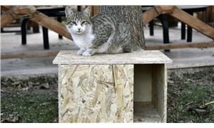 AKP'li belediyeden 'kedi kulübesini kaldırın' tebligatı