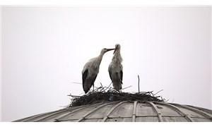 Bingöl'de yuva kuran iki leylek, dört yıldır göç etmiyor