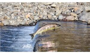 İnsan faaliyetleri, tatlı su balıklarının neslini tüketiyor