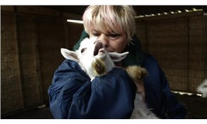 Kesime gidecek hamile keçileri kurtaran hayvansever, yem yardımı bekliyor