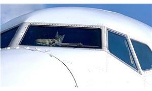 Kokpite girip pilotlara saldıran kedi, uçağa acil iniş yaptırdı