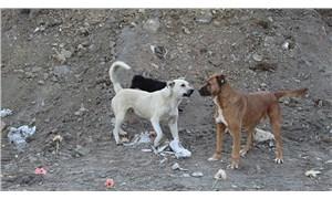 Ankara Barosu'ndan Gölbaşı'ndaki köpek katliamı için suç duyurusu