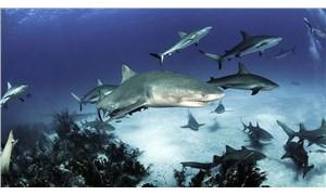 3 köpek balığı türünde 'parlama' özelliğinin olduğu tespit edildi