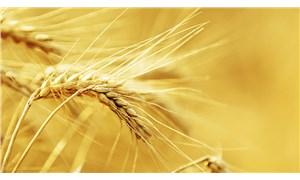 Küresel gıda fiyatları bir ayda yüzde 4,3 arttı: Kıtlık kapıyı çaldı