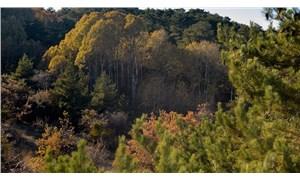 Orman talanını kolaylaştıran düzenlemeye dava açıldı