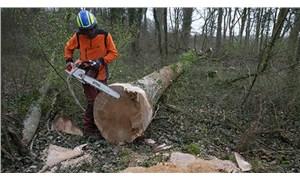 Notre Dame Katedral'nin yeniden inşası için 230 yıllık meşe ağaçları kesiliyor