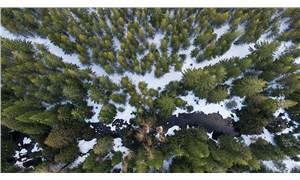 Orman talanını yargıya taşıdılar