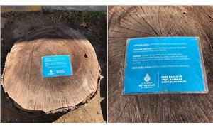 İBB'den kesilen ağaçlar için bilgilendirme kartı