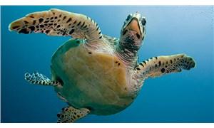 Madagaskar'da kaplumbağa etinden zehirlenen 19 kişi öldü