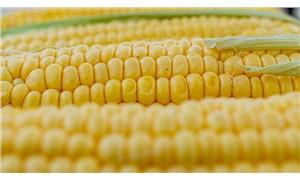 Türkiye, 115 bin ton mısır ithal etti