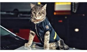 Ukrayna'da donmaktan kurtarılan kedi, itfaiye ekibine katıldı
