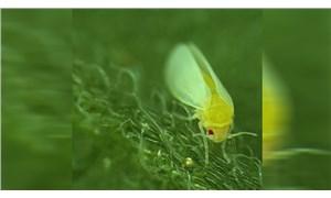 Bilinen ilk bitki hayvan arası yatay gen transferi: BtPMaT1