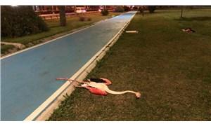 İzmir'deki flamingoların ölüm nedeni belli oldu