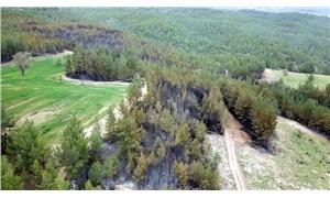 Muğla'daki orman yangınlarında sabotaj şüphesi: Soruşturma başlatıldı