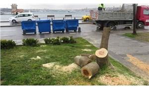 Kız Kulesi'nin karşısındaki ağaçları manzara için kesenlere 100'er fidan dikme cezası