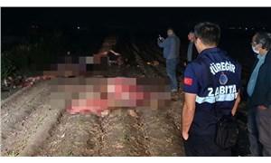 Adana'da, tarlada kesilmiş 3 at bulundu