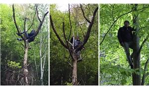 İkizdereliler, doğa katliamına ağaçlara çıkarak direniyor