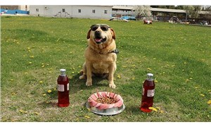 Çorum jandarmasında iz takip köpeği olarak kullanılan 'Hisar' emekli oldu