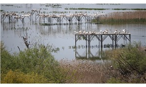 100 hektarlık sazlık ortadan kayboldu