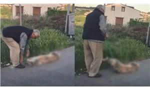 Sarıyer'de köpeğini silahla vurarak katleden kişi gözaltına alındı