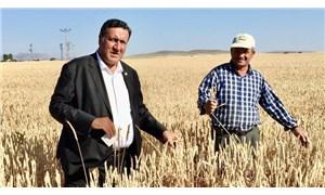 CHP'li Gürer: Buğdayda tehlike çanları çalıyor!