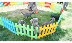 Konya'da sahibinin eziyet ettiği köpekler korumaya alındı