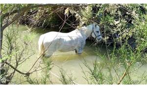 Çay yatağına bağlanıp ölüme terk edilen 2 at kurtarıldı