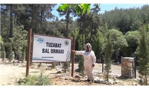 Milas'ın bal ormanlarında maden ocağı tehlikesi: 'ÇED Gerekli Değildir' kararı yargıya taşınıyor
