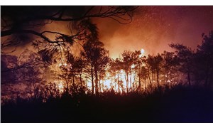 Son 4 yılda hektar hektar orman yanıp kül oldu