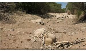 Çiftçi tepkili: Sakarya'nın kolları kuruyor, DSİ kayıtsız