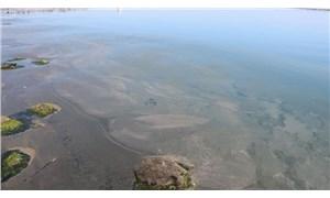 Marmara Denizi'nin ardından Karadeniz'de de deniz salyası görüldü
