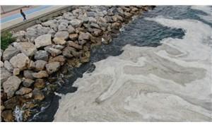 Marmara'daki müsilaj dünya basınında: Deniz yaşamı tehlikede