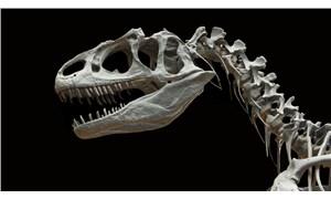 Uzunluğu 30 metre: Bilim insanları, Avustralya'nın en büyük dinozor türünü keşfetti