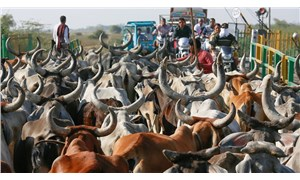 Hindistan'da bir kişi inek kaçakçılığı yaptığı iddiasıyla öldürüldü
