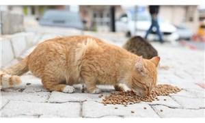 Sokak hayvanlarını besleyen kadın darp edildi