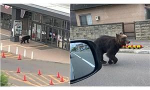 Japonya'da şehir merkezine inip 4 kişiyi yaralayan ayı öldürüldü