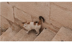 Avustralya Knox'ta kedilere sokağa çıkma yasağı