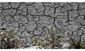 Kuraklık: Hububat fiyatları yükselecek, buğday krizi kapıda