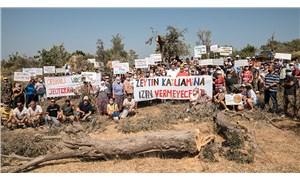 Seferihisar'da JES şirketi usulsüzce zeytin ağaçlarını katlediyor